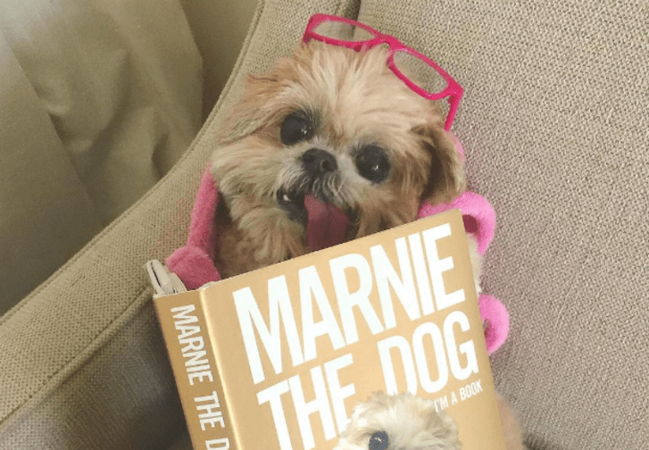 11 Fun Facts About Internet Superstar Marnie the Dog