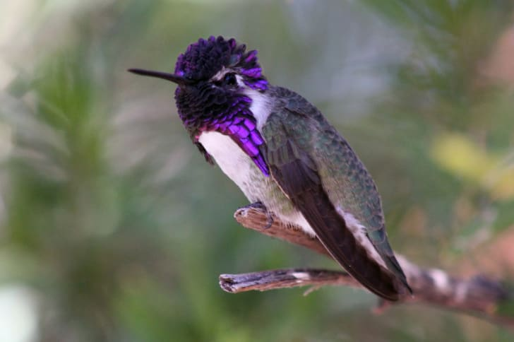 9 Adorable Facts About Hummingbirds | Mental Floss