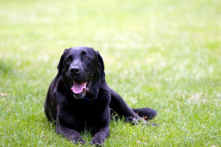 Surprising Answers for 15 Questions About Your Dog | Mental