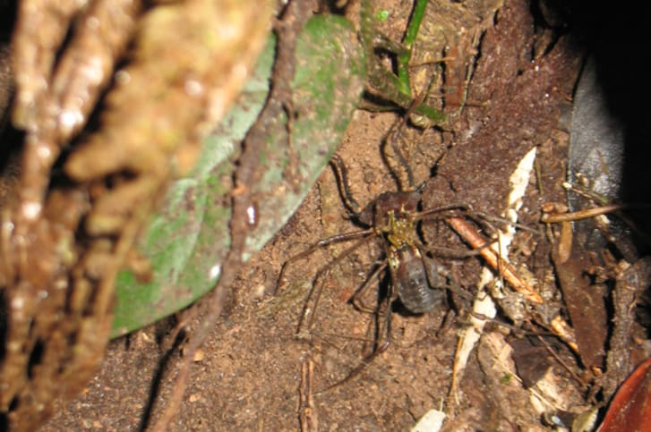 15 Fascinating Facts About Daddy Longlegs | Mental Floss