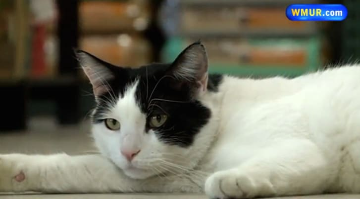 9 Incredible Stories of Lost and Found Cats   Mental Floss