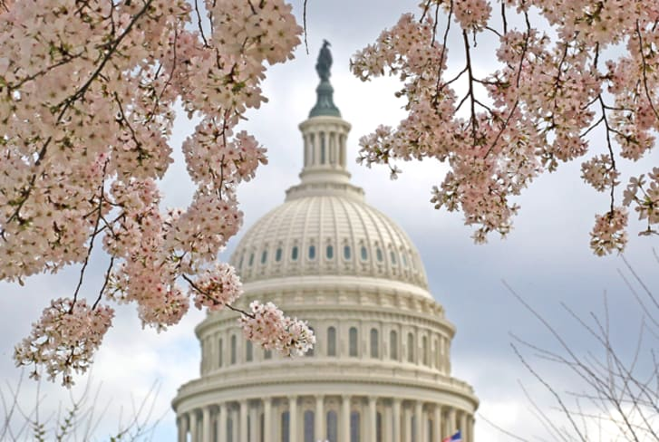 A cherry tree is in full bloom in front of the U.S. Capitol on March 19, 2012 in Washington, DC.