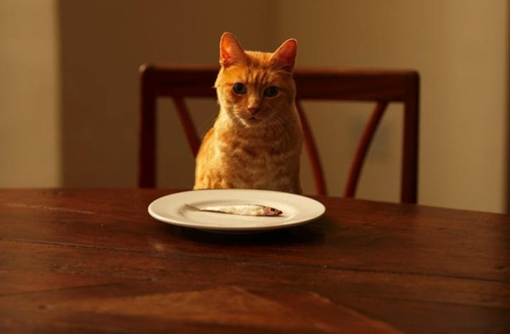 20 Fun Facts About Our Mysterious Feline Friends | Mental Floss