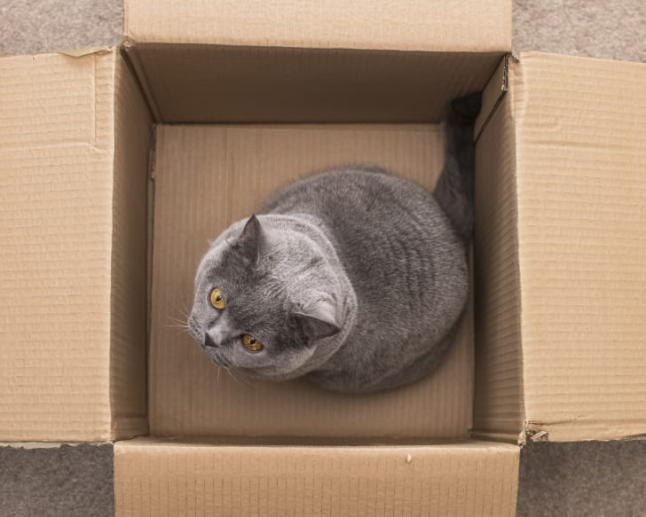gray cat in a cardboard box