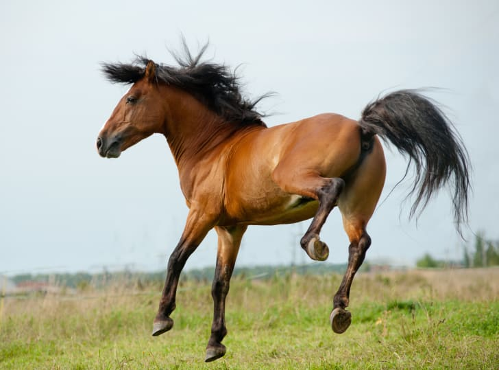 A stallion playing