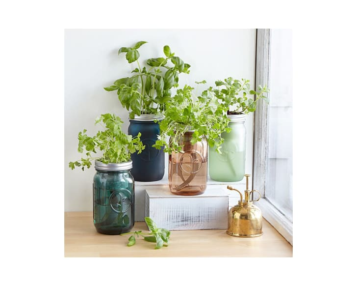 Mason jars with herbs growing out of them on a windowsill