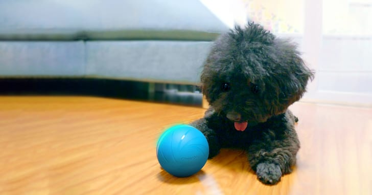 Dog with robotic ball toy.