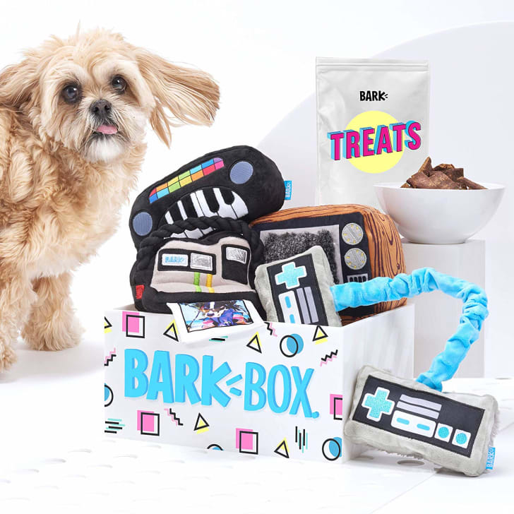 A collection of BarkBox toys and treats