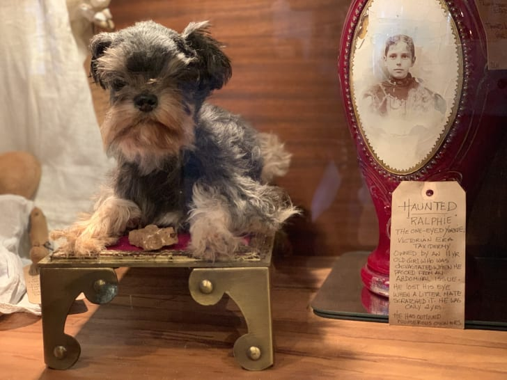 """""""Haunted Ralphie,"""" a haunted taxidermied dog, at the Creeper Gallery"""
