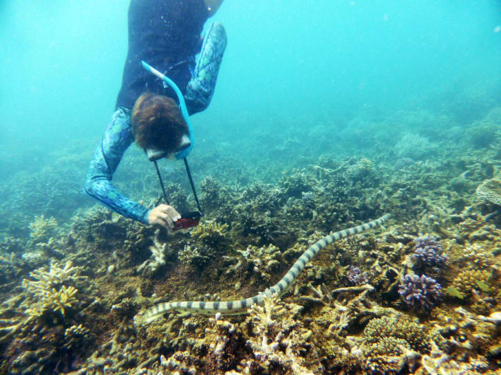 snorkeling grandma photographs sea snake
