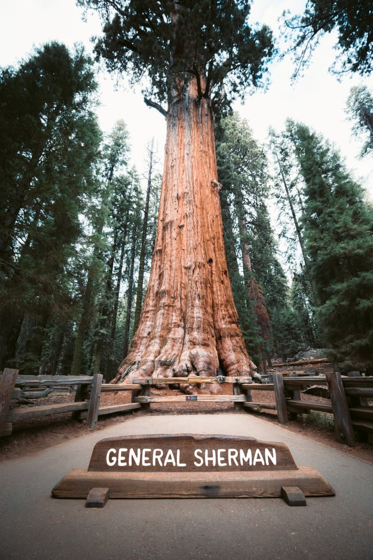 The largest single stem tree in the world, a sequoia in California