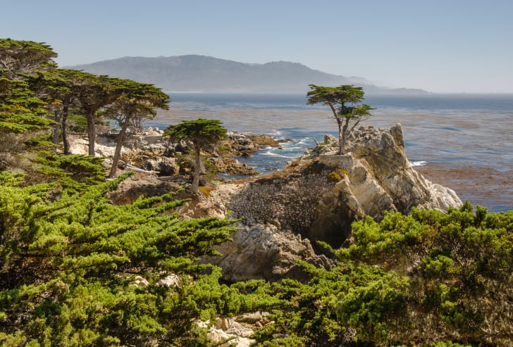 A lone Cypress tree stands on a rocky outpost just off the cliffside coast of Monterey, California