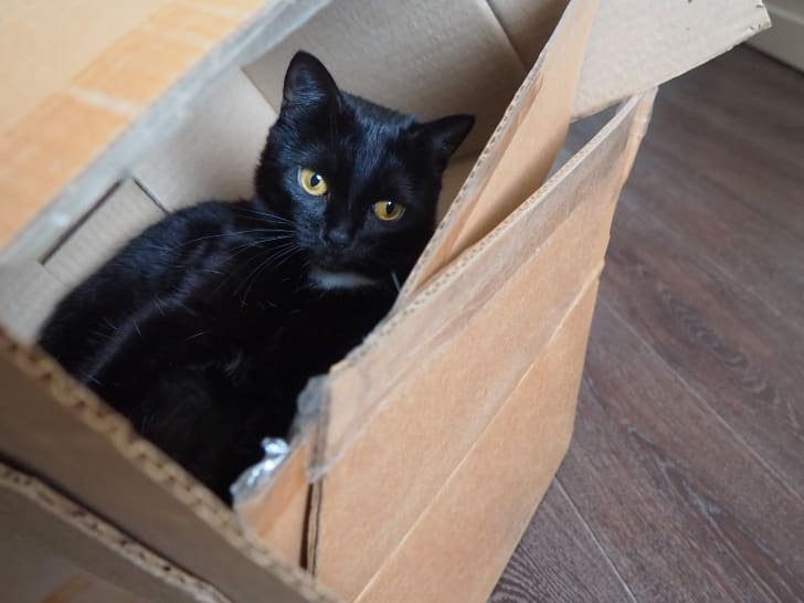 A black cat inside a cardboard box.