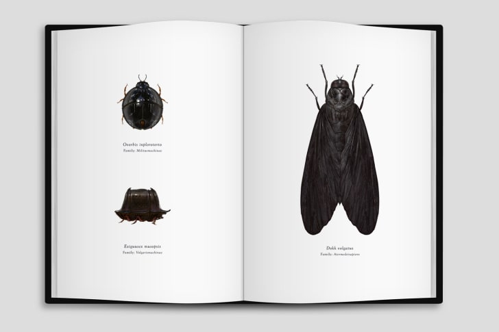Book of Star Wars icons as bugs.