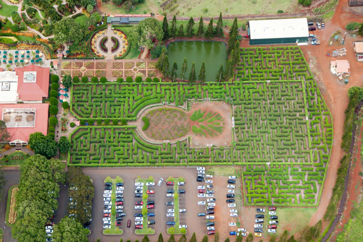 Aerial view of Dole Plantation's Pineapple Garden Maze