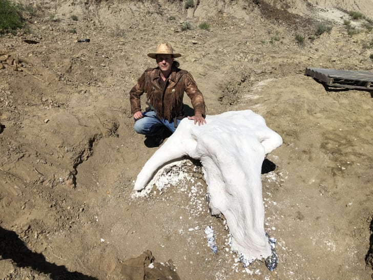 Michael Kjelland with Triceratops skull treated with foil and plaster.