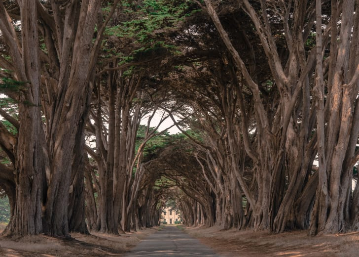 Cypress Tree Tunnel at Point Reyes National Seashore, CA