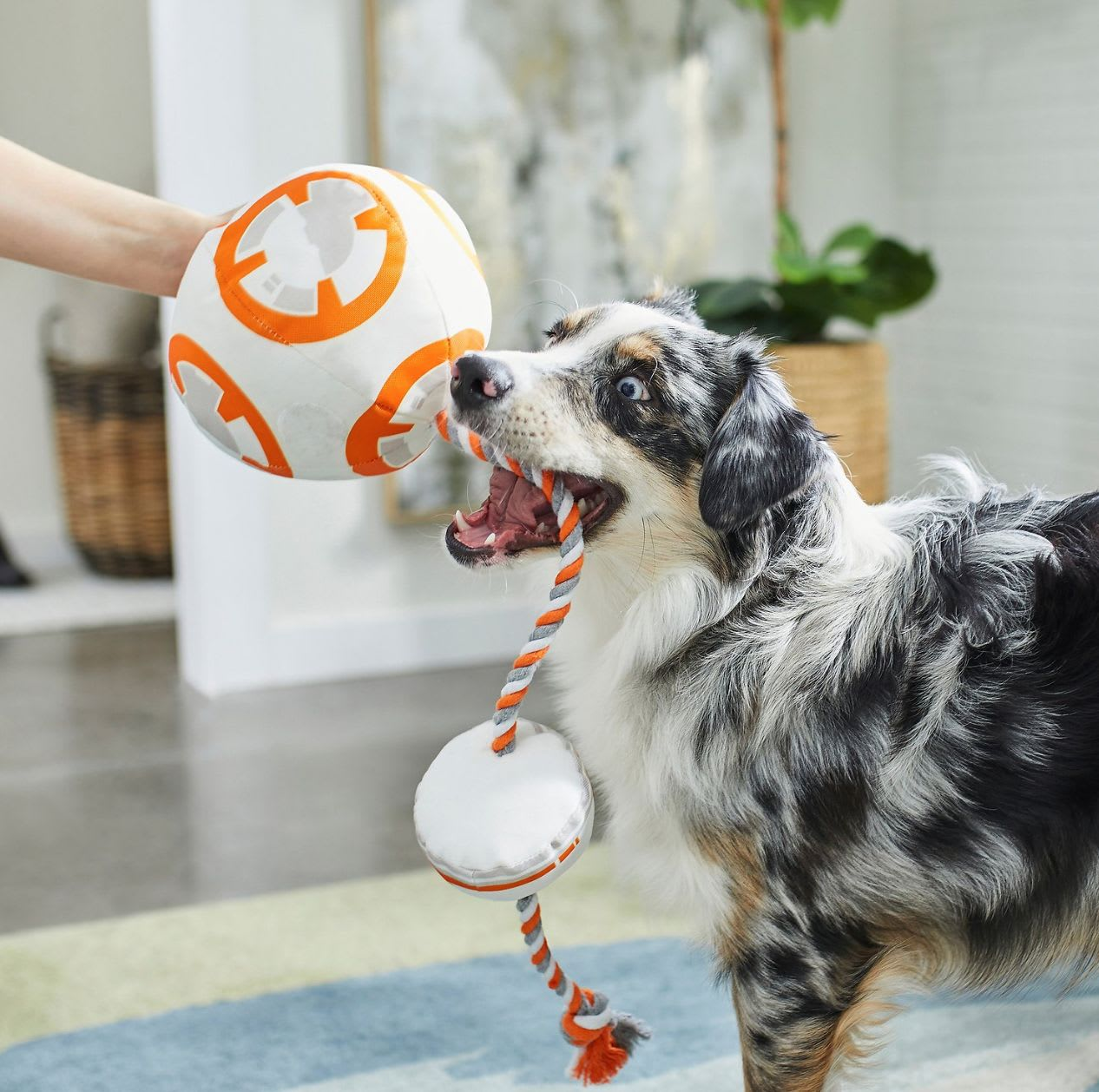 Discover the BB-8 dog rope toy from the Disney Collection at Chewy.