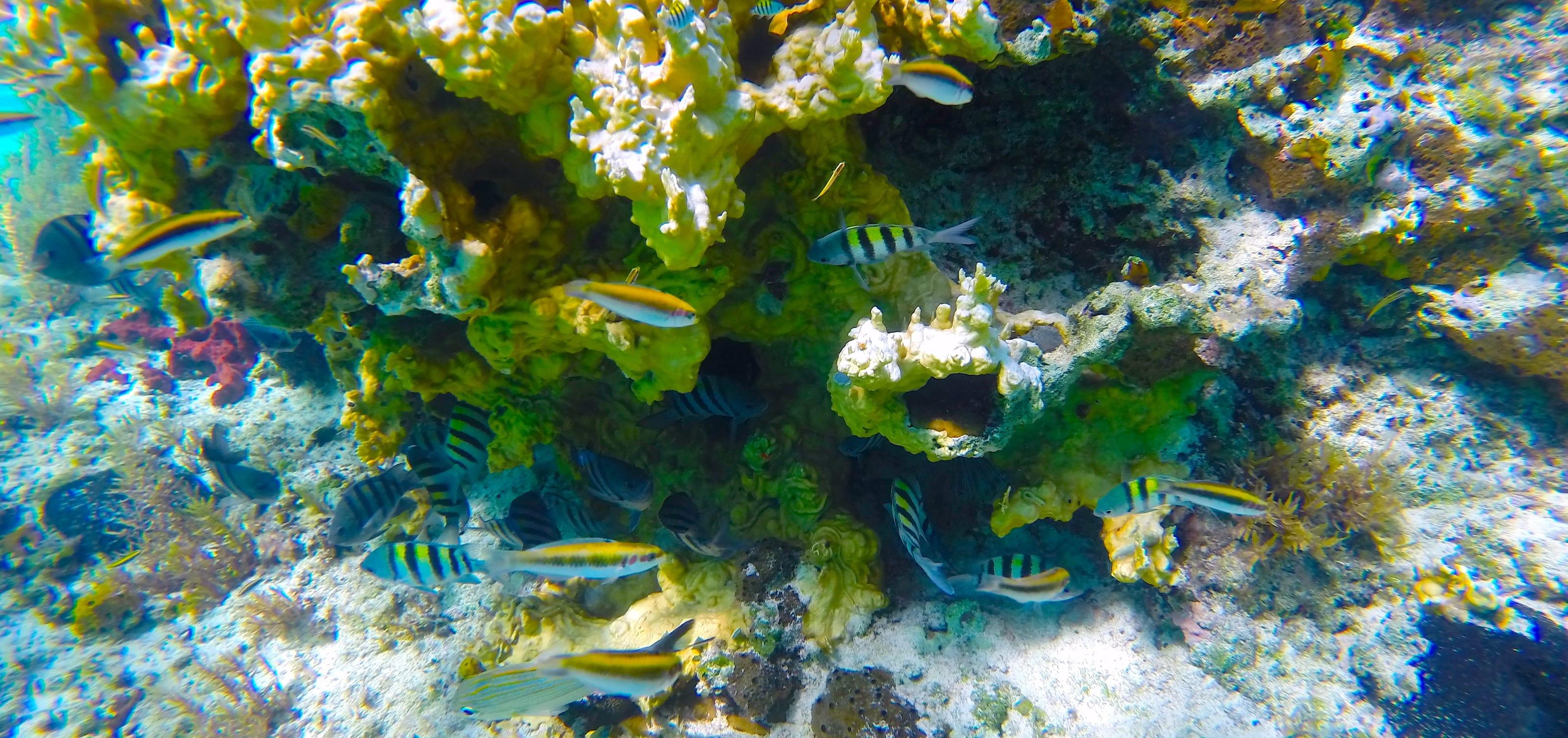 Half Moon Cay reef