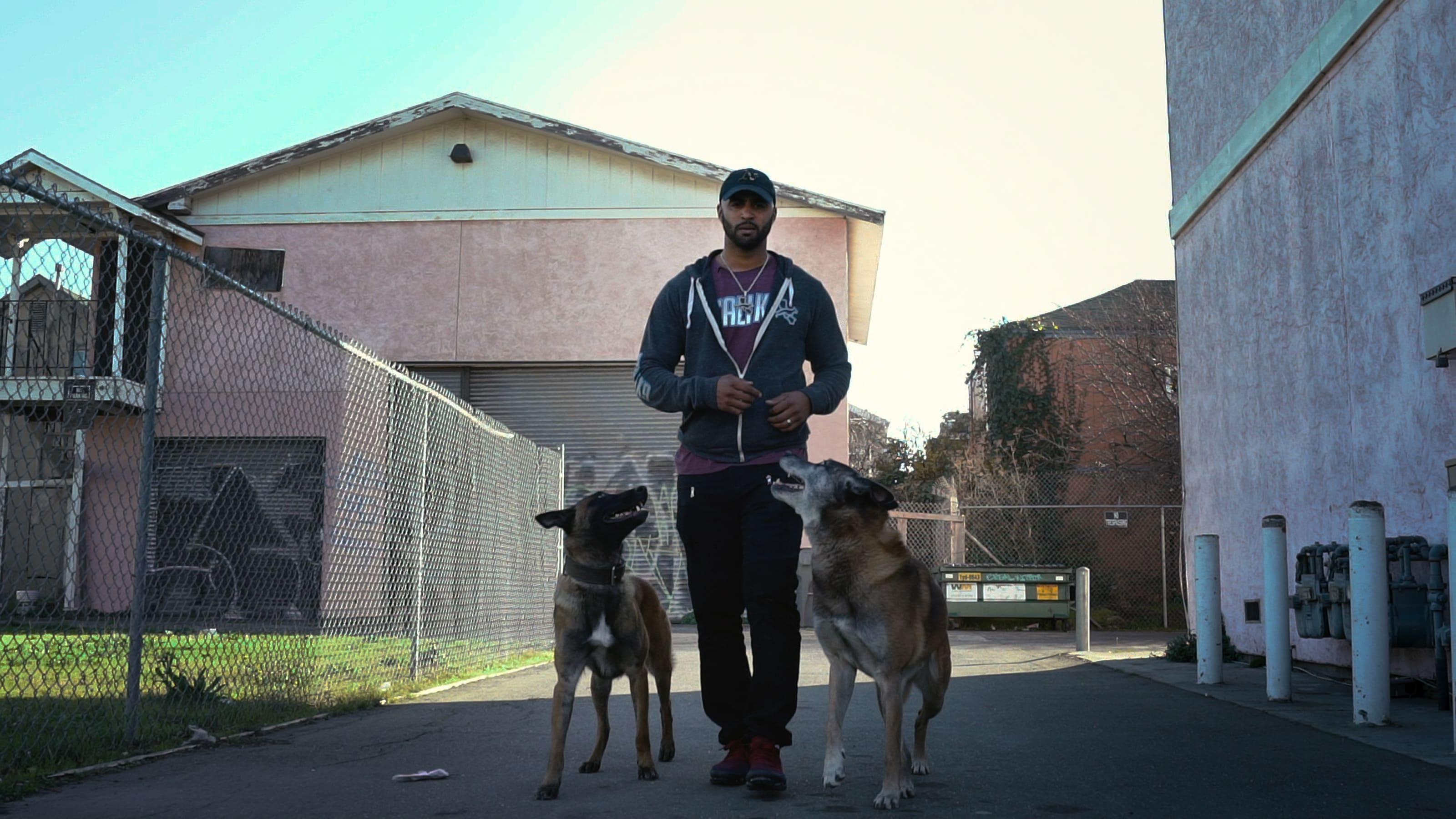 Intervention canine