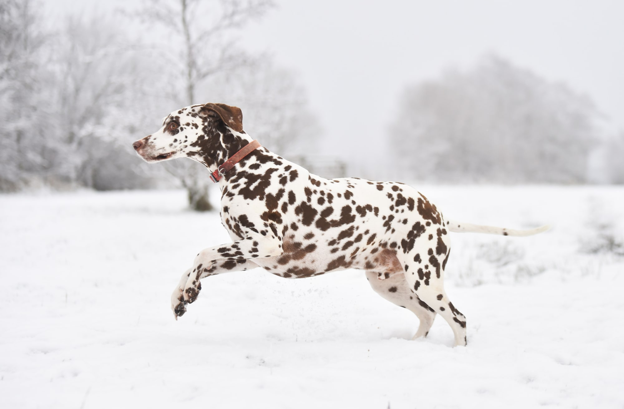 The cutest dog breeds according to science