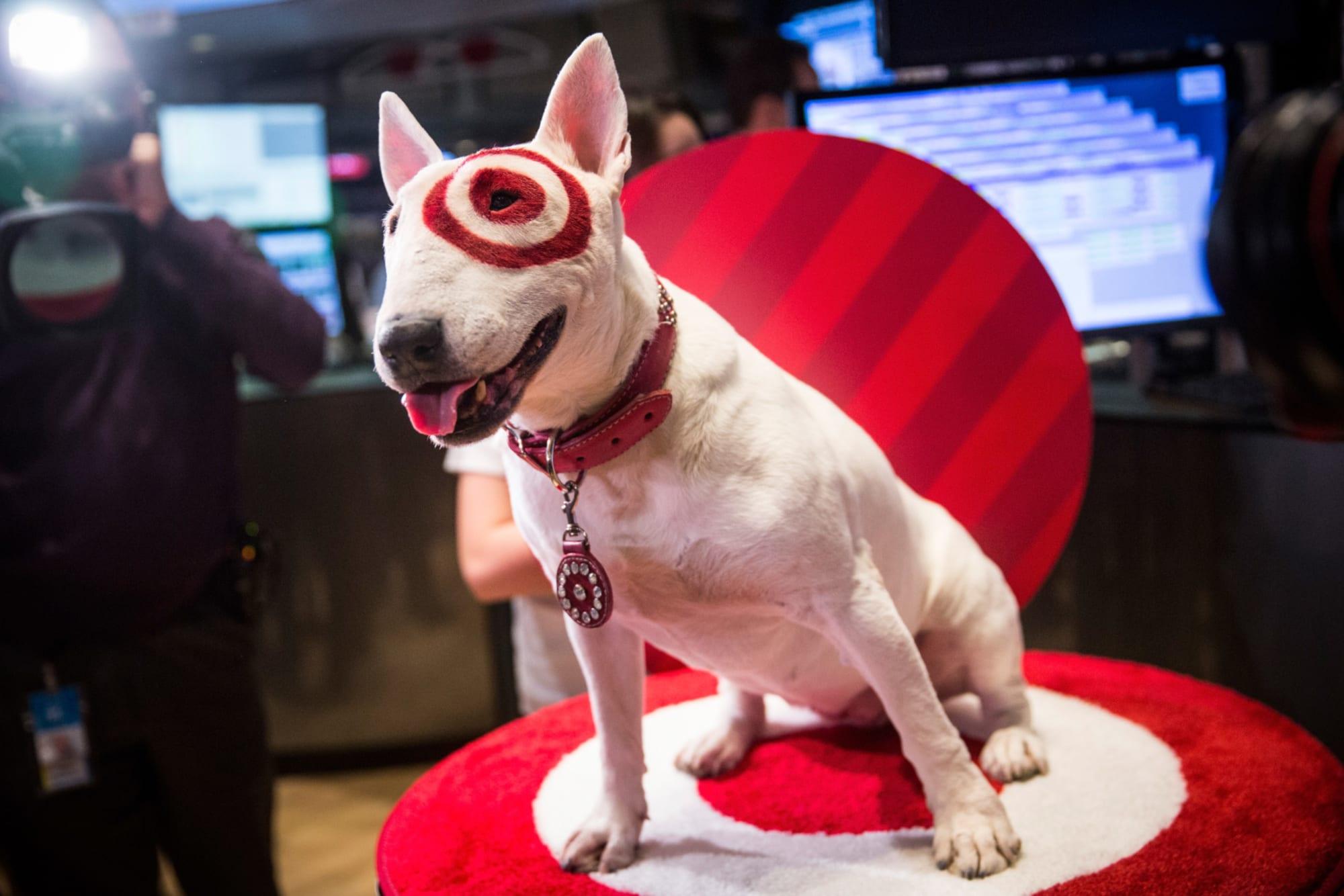 Breeds 101: Meet the Bull Terrier