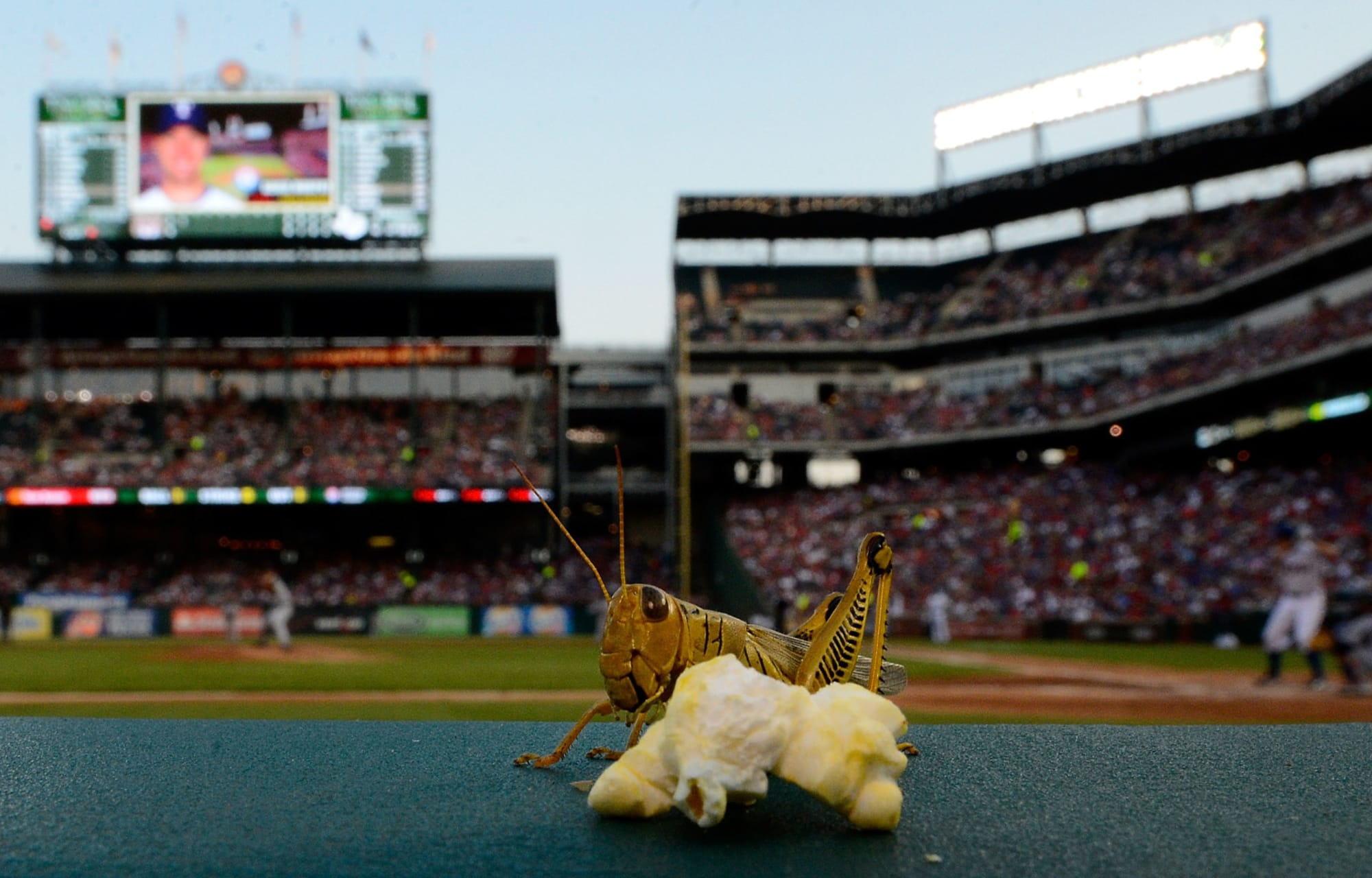 Detroit Tigers: When Baseballs and Food Collide