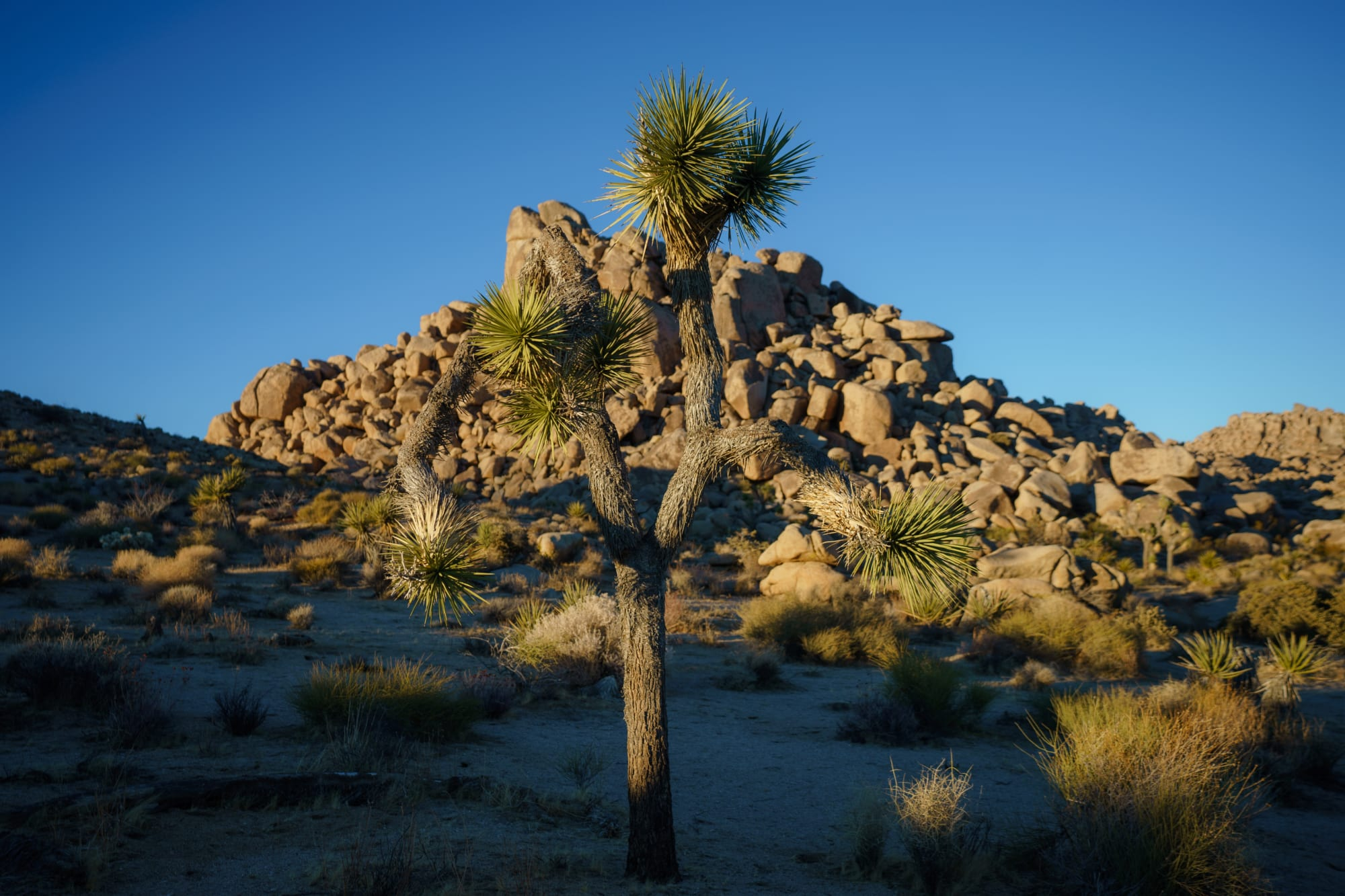 Joshua Tree National Park is a sought after experience for good reason