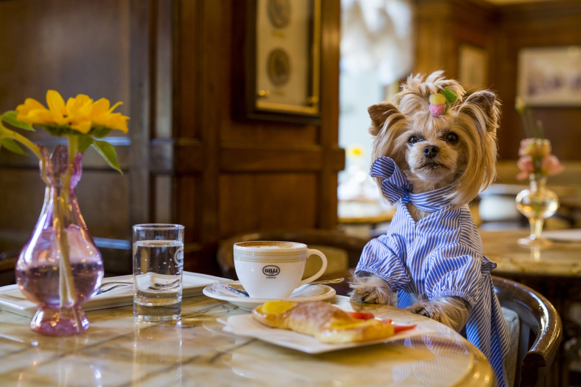 This pet pleasant cafe in Salem, Massachusetts welcomes four-legged mates from canine to bunnies