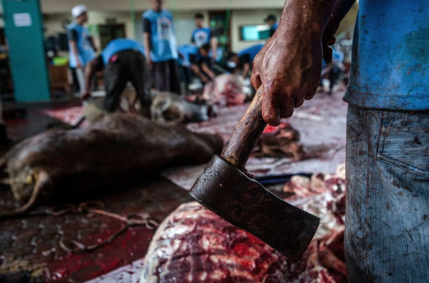 YOGYAKARTA, INDONESIA - SEPTEMBER 01: (EDITORS NOTE: Image contains graphic content) An Indonesian Muslim holds hatchet as slaughter a cow during celebrations for Eid al-Adha at Jogokaryan mosque on September 1, 2017 in Yogyakarta, Indonesia. Muslims worldwide celebrate Eid Al-Adha, to commemorate the Prophet Ibrahim's readiness to sacrifice his son as a sign of his obedience to God, during which they sacrifice permissible animals, generally goats, sheep, and cows. (Photo by Ulet Ifansasti/Getty Images)