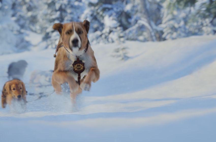 Photo: The Call of the Wild.. Image Courtesy 20th Century Fox