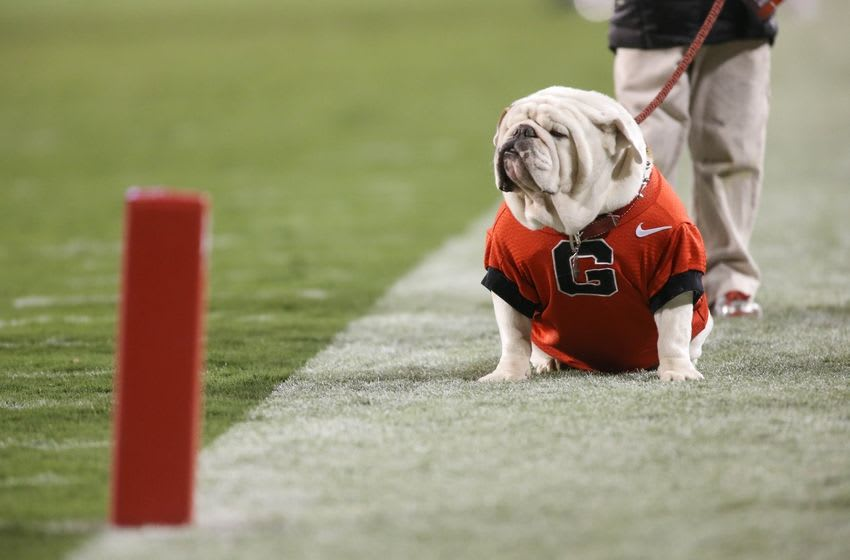 Nov 15, 2014; Athens, GA, USA; Georgia mascot UGA IX is shown on the field during their win over the Auburn Tigers at Sanford Stadium. Georgia won 34-7. Mandatory Credit: Jason Getz-USA TODAY Sports