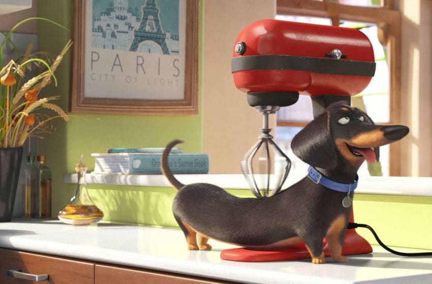 Photo Credit: The Secret Life of Pets/Universal & Illumination Entertainment Image Acquired from Universal Pictures