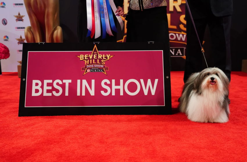 2020 Beverly Hills Dog Show results- (Photo by: Nicole Weingart/NBCUniversal)