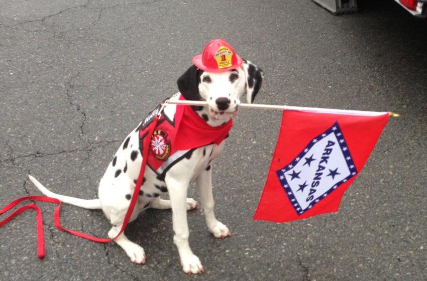 Molly the Fire Safety Dog. Photo by Dayna Hilton.