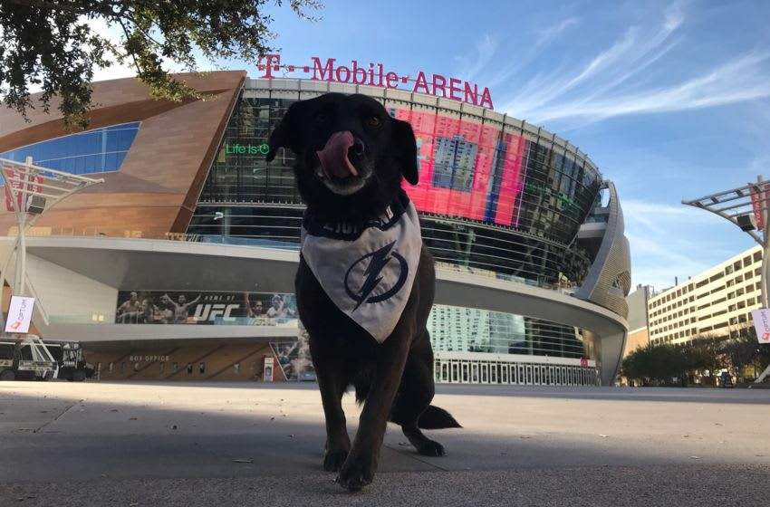 Holland the Pup at T-Mobile Arena in Las Vegas. Photo by Adam Vosding