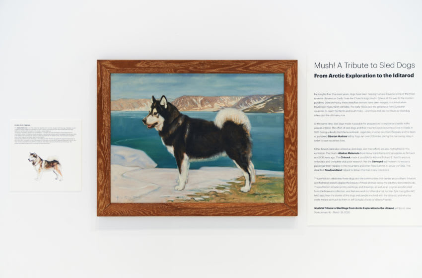 Photo: Mush A Tribute to Sled Dogs.. Image Courtesy David Woo – The American Kennel Club.