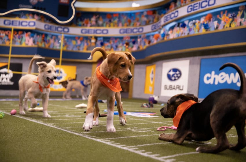 Puppies playing on the field for Puppy Bowl XVI.. Image Courtesy Damian Strohmeyer/Animal Planet