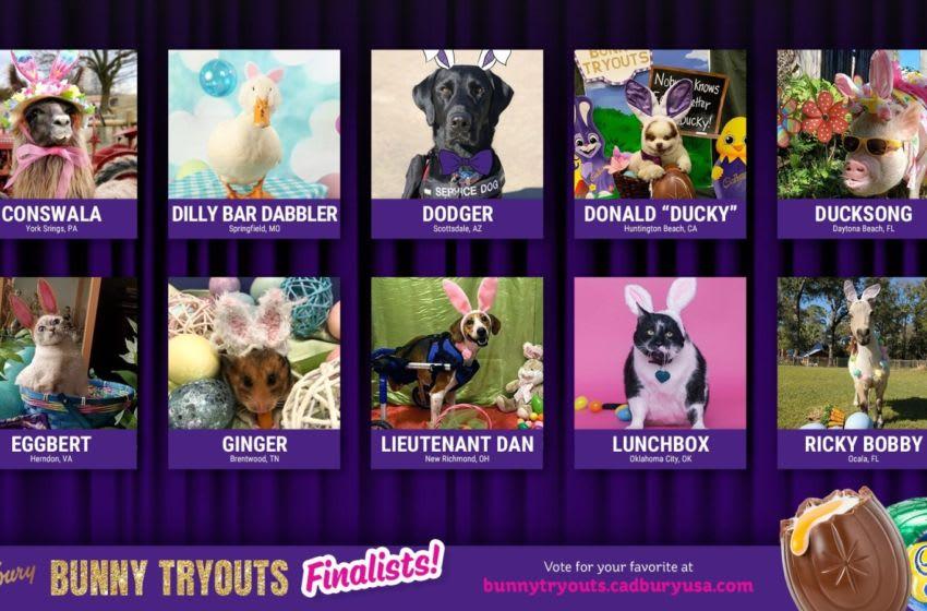 2020 Cadbury Bunny Finalists, photo provided by Cadbury