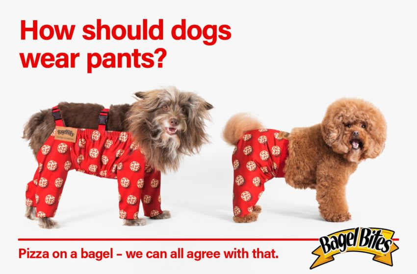 Bagel Bites pants for dogs. Image courtesy Bagel Bites