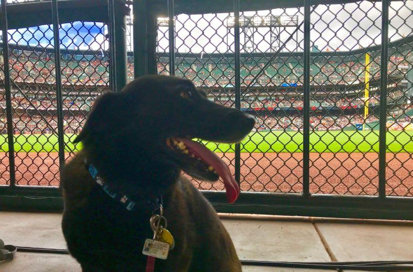 Holland the Pup enjoying her baseball fandom. Photos by Adam Vosding