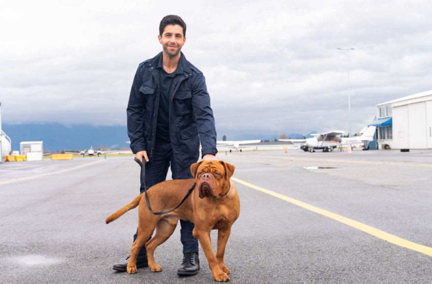 Josh Peck in Turner and Hooch. Photo courtesy of Disney Plus. © Disney, All Rights Reserved