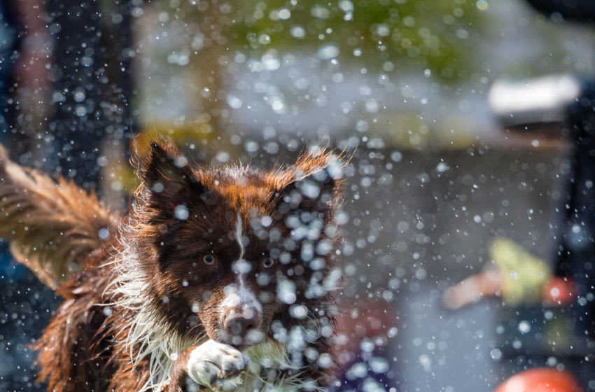 LEIPZIG, GERMANY - AUGUST 26: A dog jumps into a water basin during the dog diving competition at the 2018 Dog and Cat (Hund und Katze) pets trade fair at Leipziger Messe trade fair halls on August 26, 2018 in Leipzig, Germany. The weekend fair brings together dog and cat lovers from across the country for beauty and skills competitions as well as exhibitors showcasing the latest in pet food, toys and accessories. (Photo by Jens Schlueter/Getty Images)