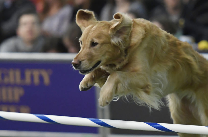 AKC Family Dog (Photo by Sarah Stier/Getty Images)