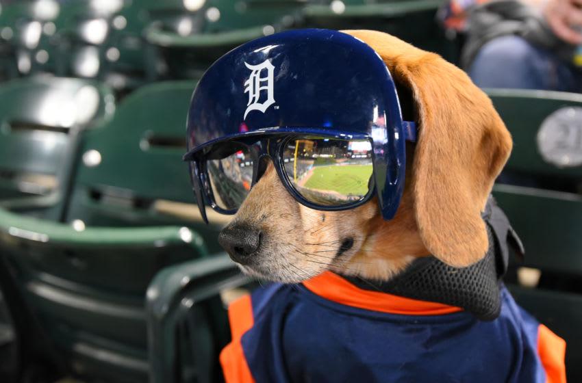 Major League Baseball batdogs (Photo by Mark Cunningham/MLB Photos via Getty Images)