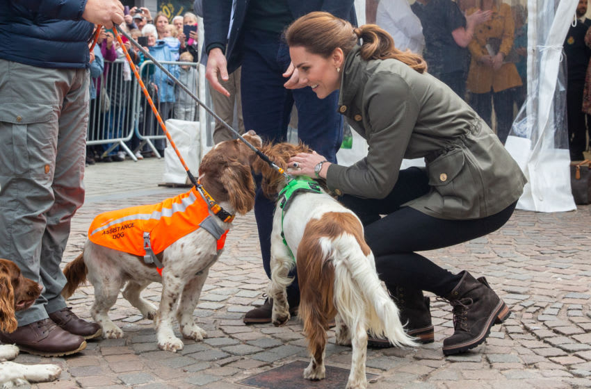 KESWICK, ENGLAND - JUNE 11: Catherine, Duchess of Cambridge pets some dogs named Max, Paddy, and Harry as she meet members of the public they visit Keswick Market place during a visit to Cumbria on June 11, 2019 in Keswick, England. The royal couple visited Keswick to join a celebration to recognise the contribution of individuals and local organisations in supporting communities and families across Cumbria. They then went on to visit a traditional fell sheep farm. (Photo by Andy Commins - WPA Pool/Getty Images)