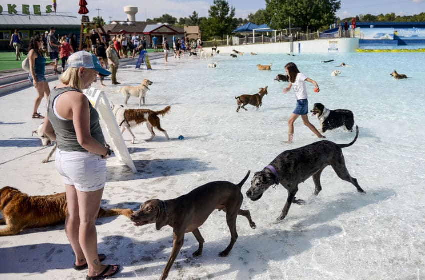 FEDERAL HEIGHTS, CO - SEPTEMBER 07: Portia Richards, 11, right, retrieves a tennis ball as dogs play in the Thunder Bay Wave Pool during the Bow Wow Beach Doggie Day at Water World on September 7, 2019 in Federal Heights, Colorado. (Photo by Michael Ciaglo/Getty Images)
