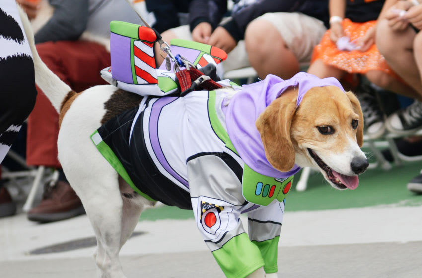LONG BEACH, CALIFORNIA - OCTOBER 27: A dog dressed as Buzz Lightyear is seen at the Haute Dog Howl'oween Parade at Marina Vista Park on October 27, 2019 in Long Beach, California. (Photo by Chelsea Guglielmino/Getty Images)