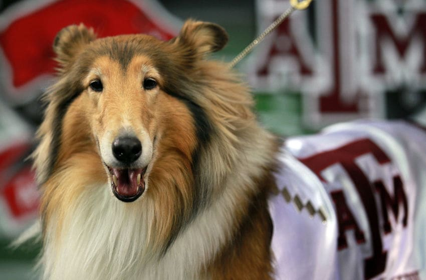 ARLINGTON, TX - OCTOBER 01: Reveille VIII, the mascot of the Texas A&M Aggies during a game against the Arkansas Razorbacks at Cowboys Stadium on October 1, 2011 in Arlington, Texas. (Photo by Ronald Martinez/Getty Images)