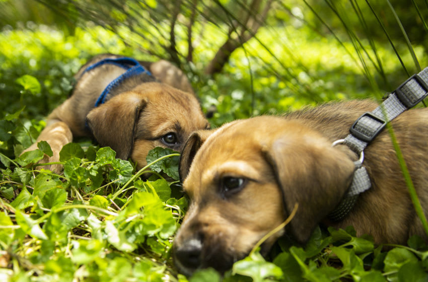 Animal Crossing Christmas puppies (Photo by Jenny Evans/Getty Images)